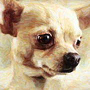 Chihuahua Dog - Painterly Art Print by Wingsdomain Art and Photography