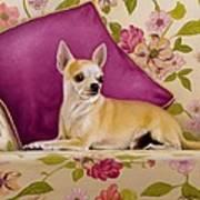 Chihuahua II Art Print