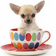 Chihuahua In Cup Dp684 Art Print by Greg Cuddiford