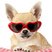 Chihuahua In Heart Sunglasses Dp813 Art Print by Greg Cuddiford