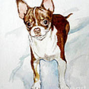 Chihuahua White Chocolate Color. Art Print