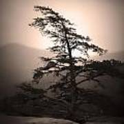 Chimney Rock Lone Tree In Sepia Art Print
