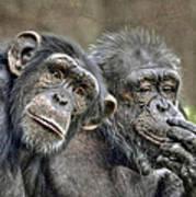 Chimp Couple Art Print