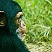 Chimpanzee Profile Art Print