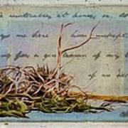 Chincoteague Driftoods Art Print