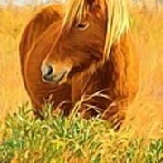 Chincoteague Pony Profile Art Print