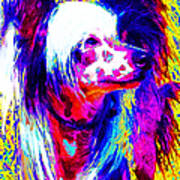 Chinese Crested Dog 20130125v1 Art Print by Wingsdomain Art and Photography