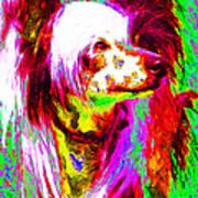 Chinese Crested Dog 20130125v2 Art Print