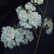 Chinese Flowers Art Print