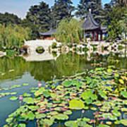 Chinese Garden - Huntington Library. Art Print