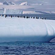 Chinstrap Penguins On Iceberg Art Print
