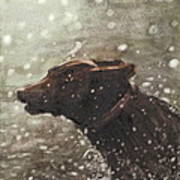 Chocolate Lab In Water Watercolor Portrait Art Print