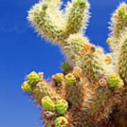 Cholla Cactus I By Diana Sainz Art Print