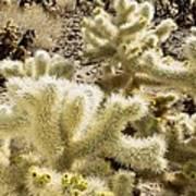 Cholla (cylindropuntia Bigelovii) Cactus Art Print