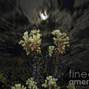 Cholla Light - Joshua Tree National Park Art Print