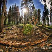 Chop Up Log Art Print