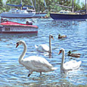 Christchurch Harbour Swans And Boats Art Print by Martin Davey