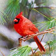 Christmas Cardinal - Male Art Print