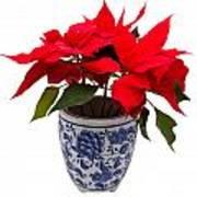 Christmas Flower  Art Print