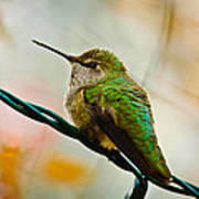 Christmas Humming Bird Art Print