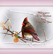 Christmas In Pink - Cardinal Christmas Art Print