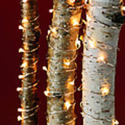Christmas Lights On Birch Branches Art Print by Elena Elisseeva