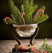 Christmas Pine Art Print