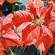 Christmas Poinsettia Magic Art Print