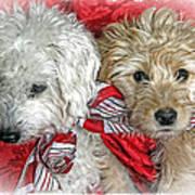 Christmas Puppy Art Print
