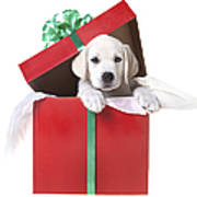 Christmas Puppy Art Print by Diane Diederich