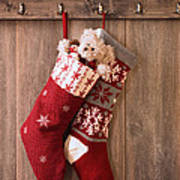 Christmas Stockings Art Print