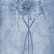 Chrysanthemum Cyanotype Art Print by John Edwards