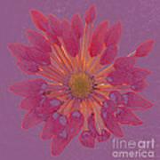Chrysanthemum Digitally Softly Toned Art Print