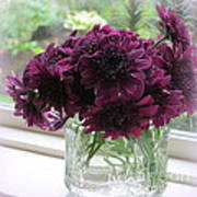 Chrysanthemums In A Glass Jar Art Print