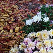 Chrysanthemums In The Forest Art Print by Ioana Ciurariu