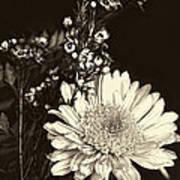 Chrysanthimum Art Print