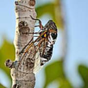 Cicada On Fig Tree Art Print