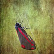 Cinnabar Moth Art Texture Wall Decor. Art Print