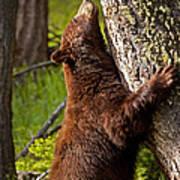 Cinnamon Boar Black Bear Art Print