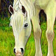 Cisco Sees Horse Art Art Print