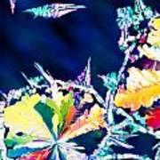 Citric Acid Microcrystals Color Abstract Art Art Print