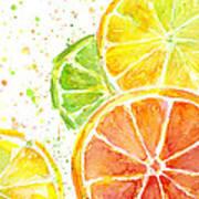 Citrus Fruit Watercolor Art Print