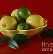 Citrus Passion Art Print