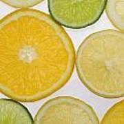 Citrus Slices Art Print