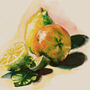 Citrus Under The Sun Light Art Print by Alessandra Andrisani