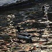 City Ducks 2  Art Print