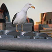 City Seagull Art Print by Stephen Norris