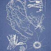 Cladosiphon Decipiens Print by Aged Pixel