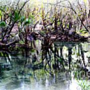 Clear Florida Springs Art Print