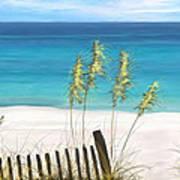 Clear Water Florida Art Print